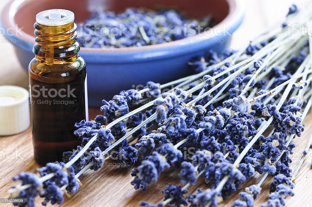 Lavender herb and essential oil stock photo