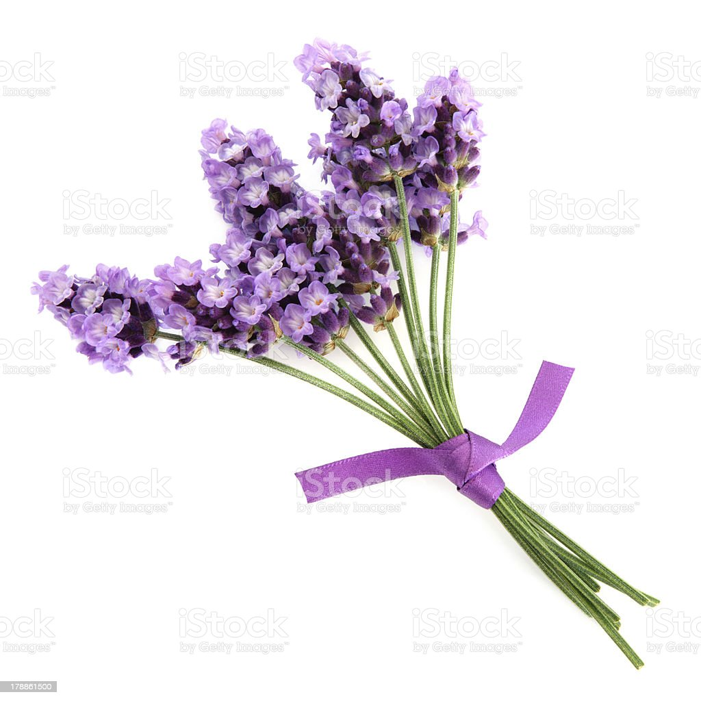 Lavender Herb royalty-free stock photo