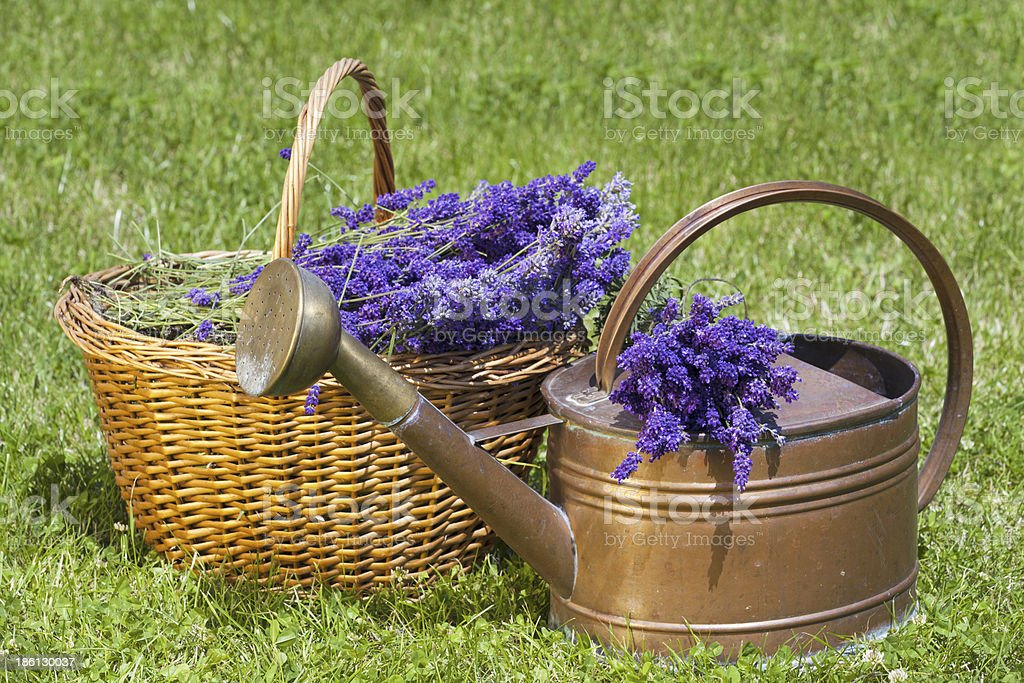 Lavender in a wicker basket and Watering Can royalty-free stock photo
