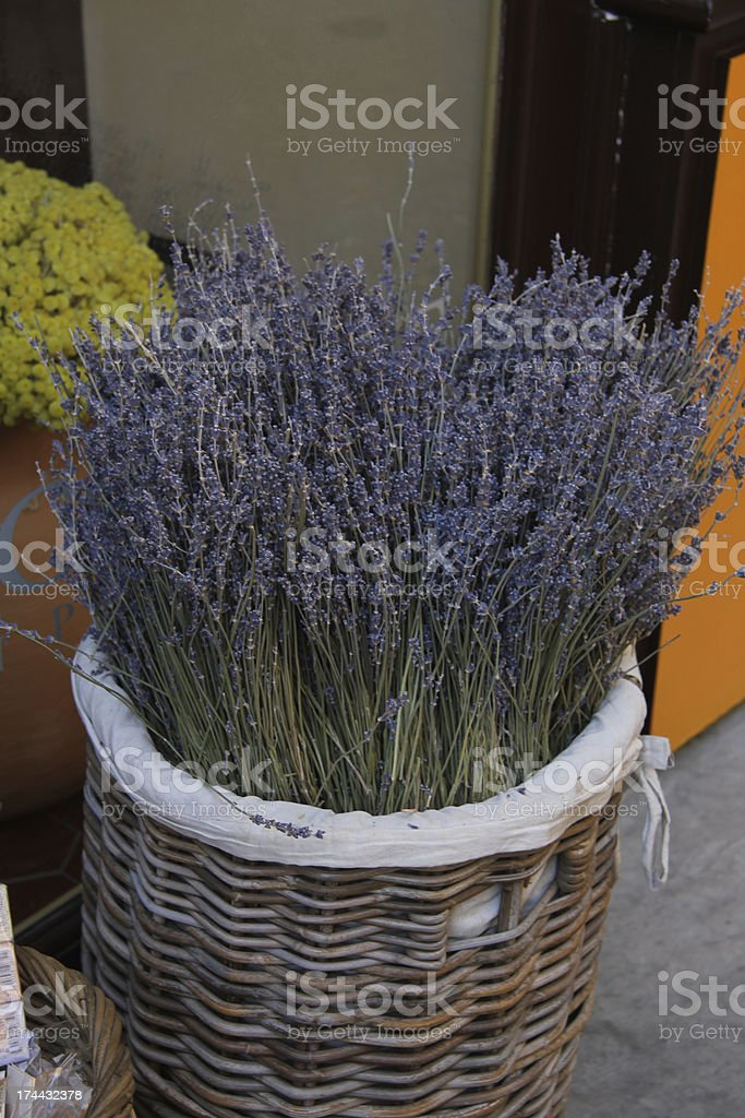 Lavender in a wicker basket royalty-free stock photo