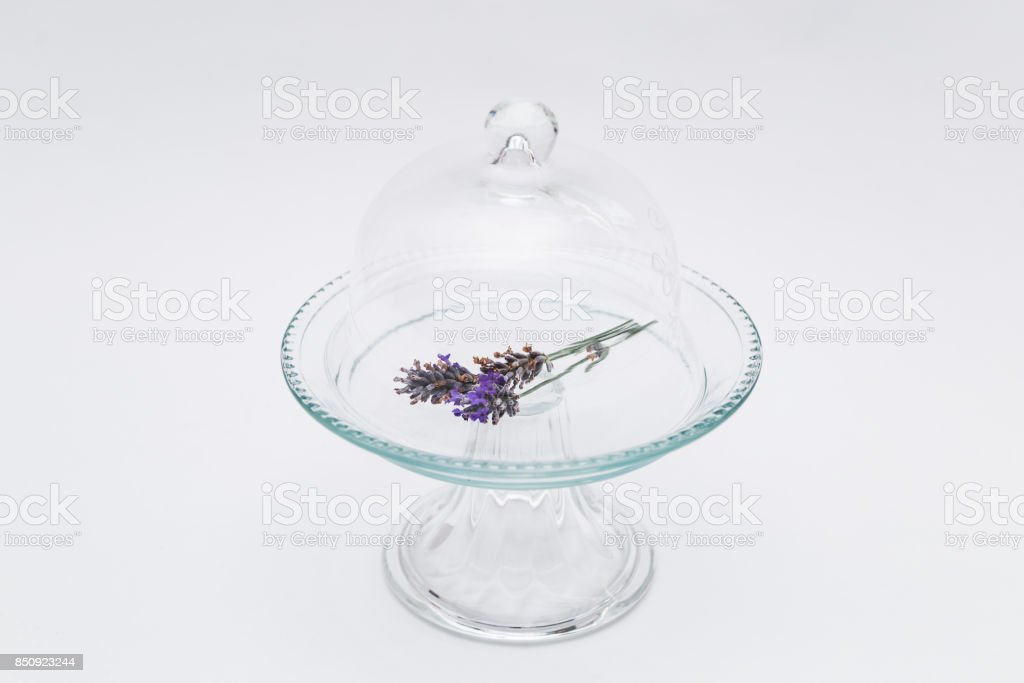 Lavender in glass tray and cap on white background stock photo