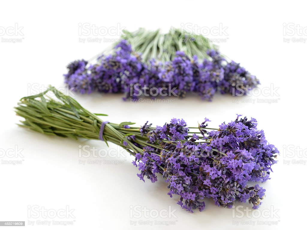 Lavender isolated royalty-free stock photo