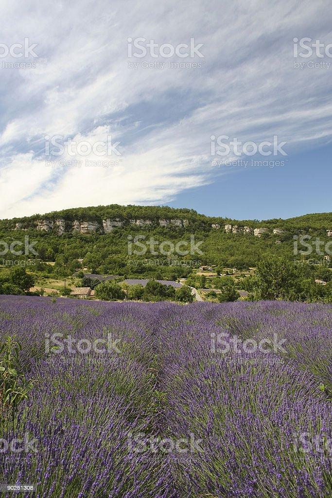 lavender landscape provence france royalty-free stock photo