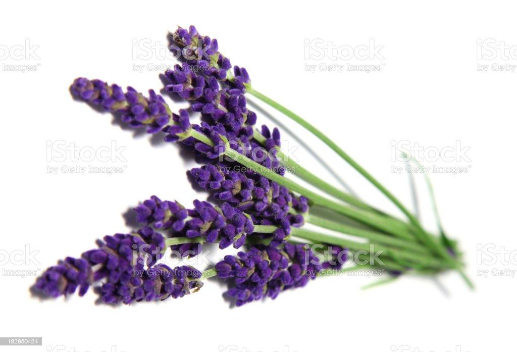 Lavender on white royalty-free stock photo
