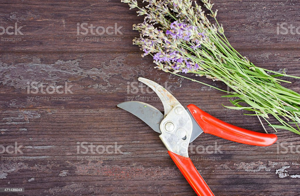 lavender on wooden planks stock photo