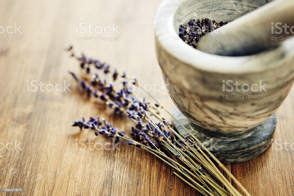 Lavender royalty-free stock photo