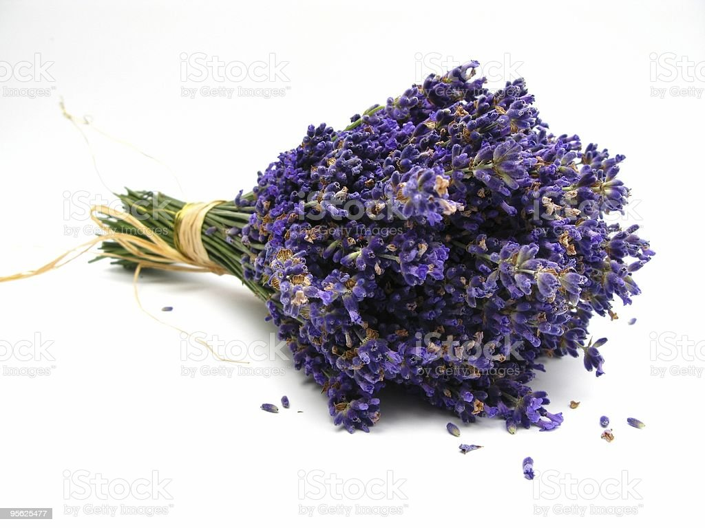 Lavendel royalty-free stock photo