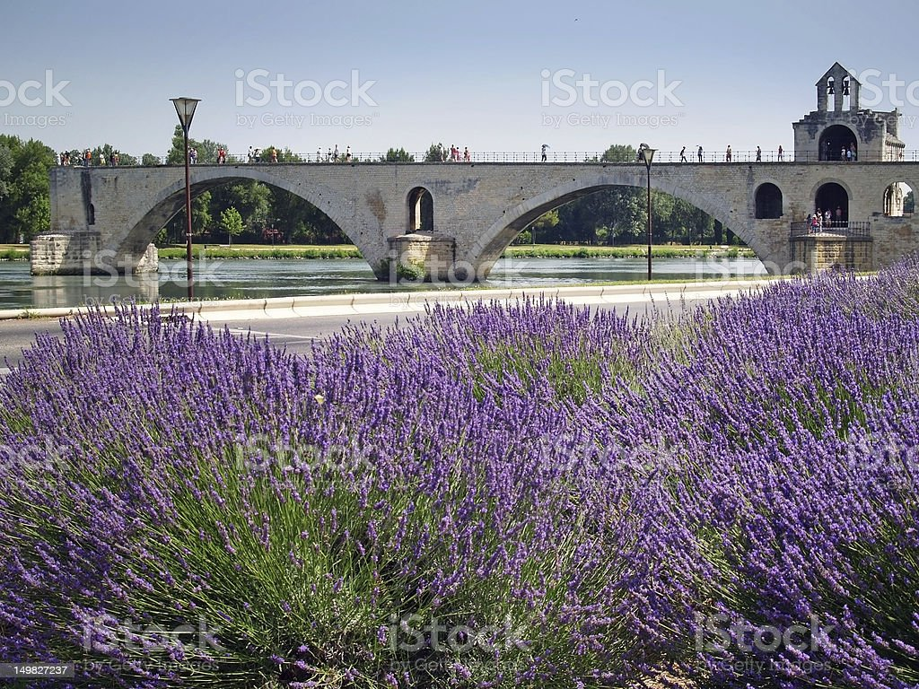 Lavender plants with the Pont d'Avignon in the background stock photo