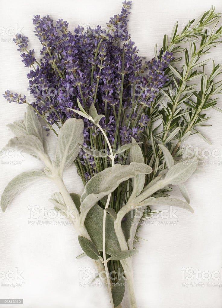Lavender & Rosemary royalty-free stock photo