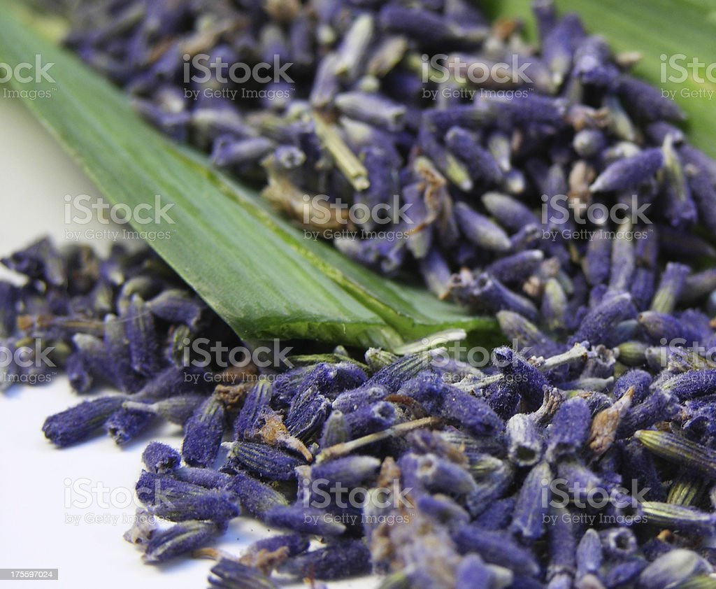 Lavender Seeds on Green royalty-free stock photo