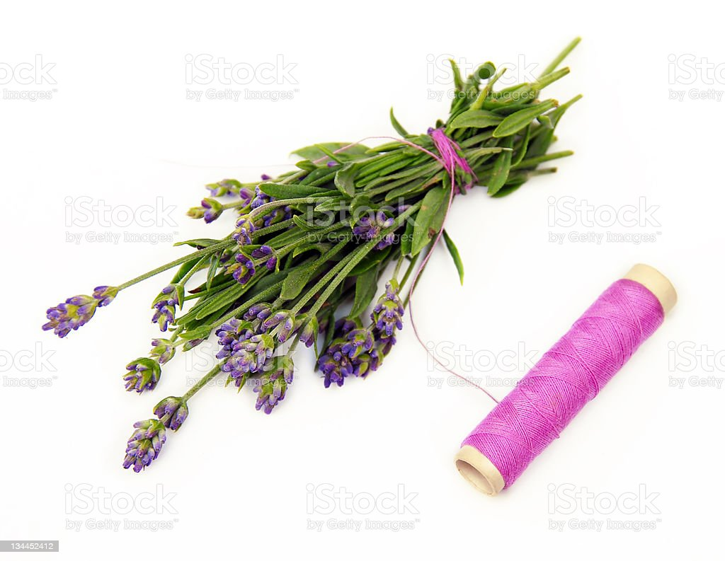 Lavender small bouquet royalty-free stock photo