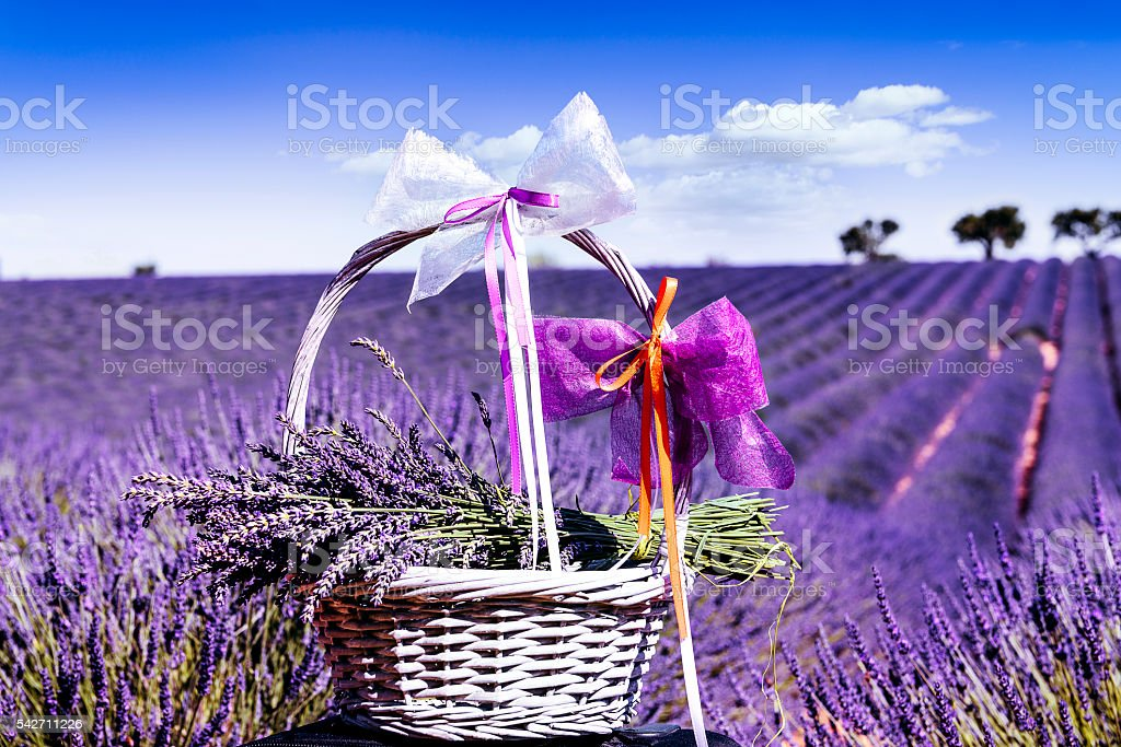 Lavender spirit stock photo