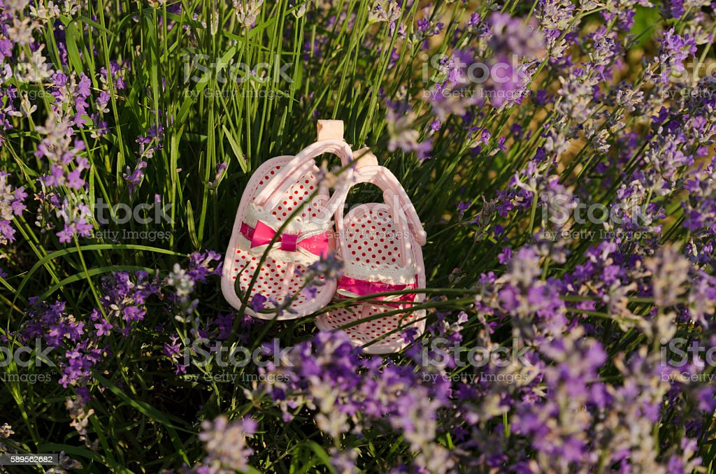 Lavender stems in a field with baby shoes. stock photo