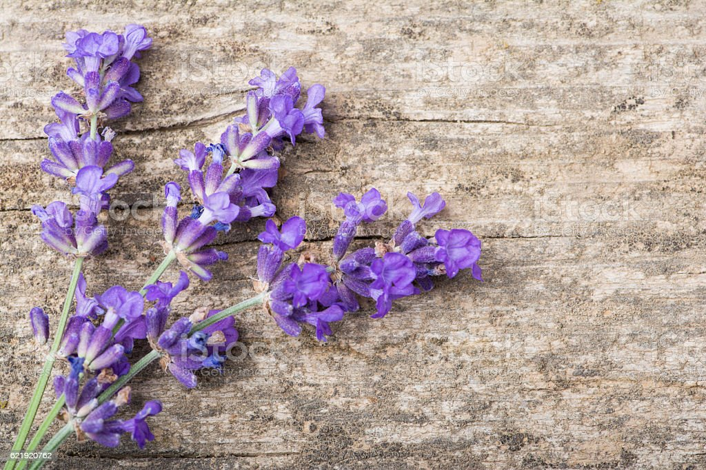 Lavender Stems on Wooden Plank stock photo