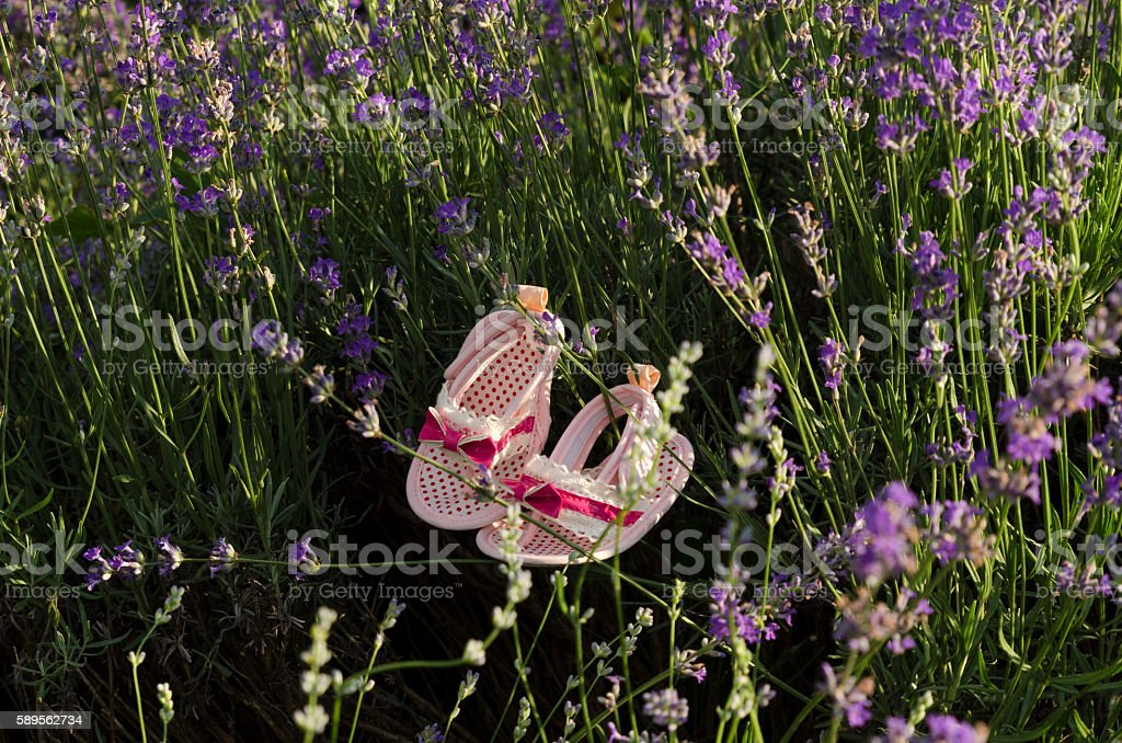Lavender stems with baby girl shoes stock photo