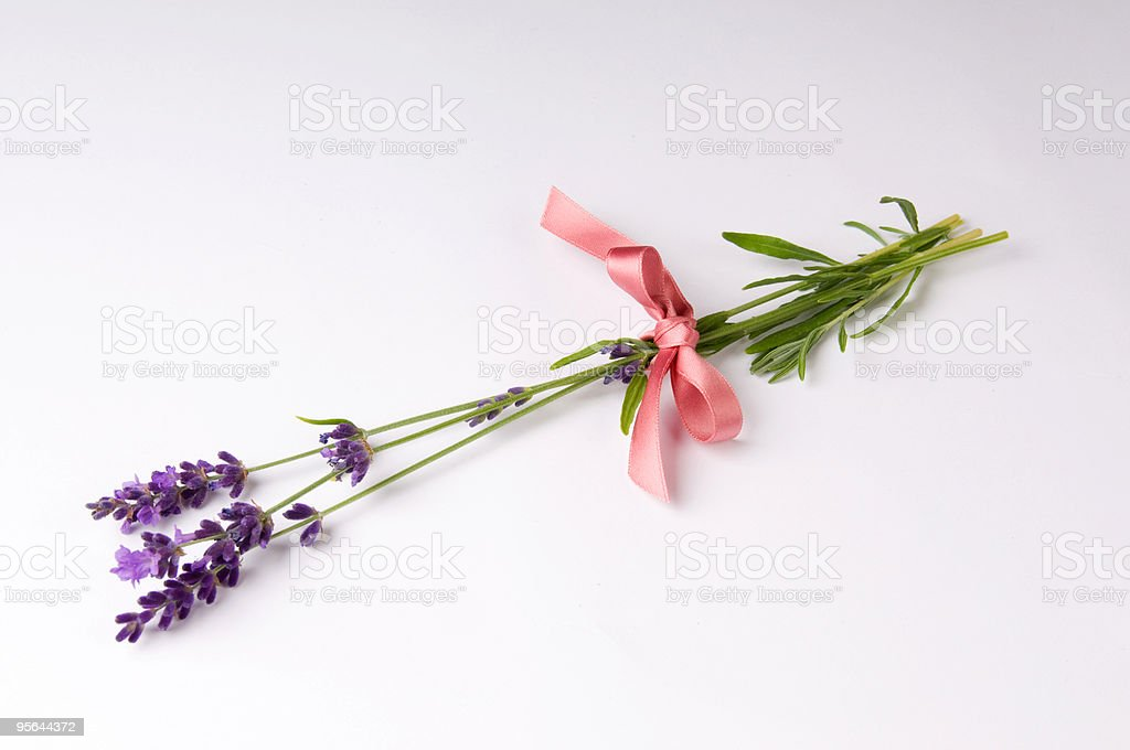 Lavender Tied with a Pink Ribbon royalty-free stock photo