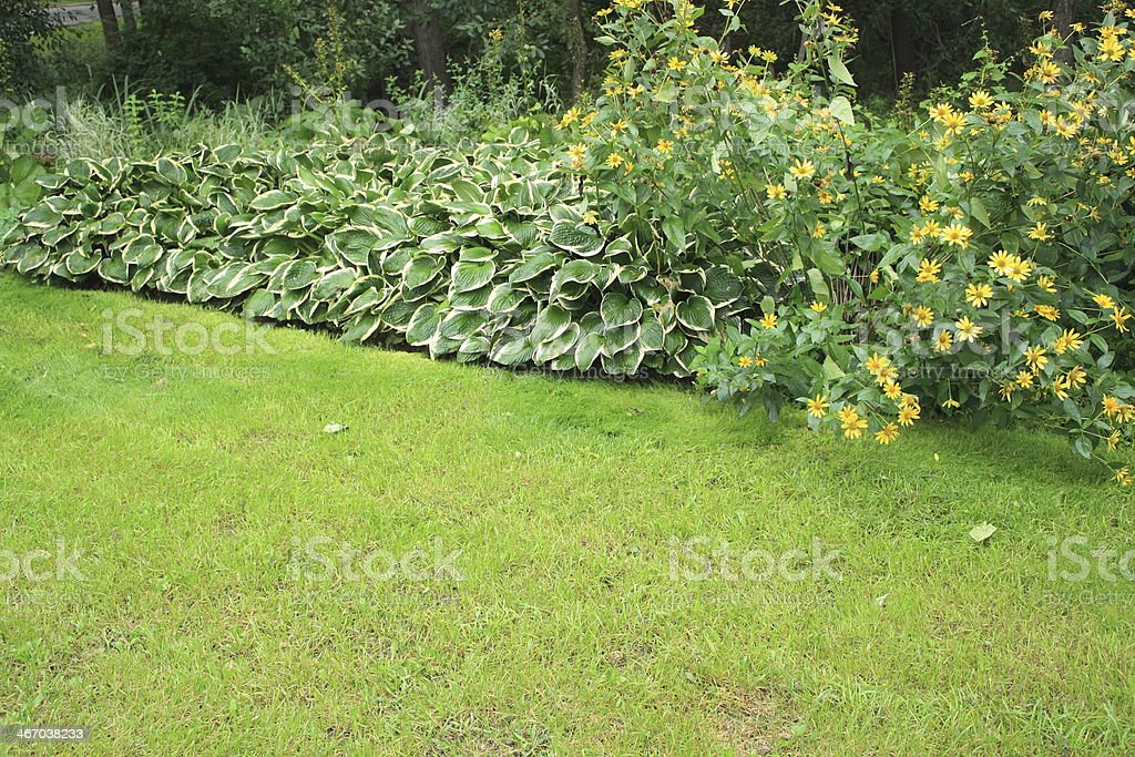 Lawn and leaf stock photo