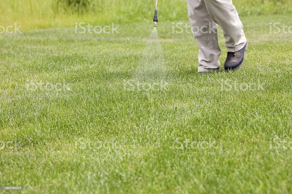 Lawn Care Worker Sprays Crabgrass stock photo