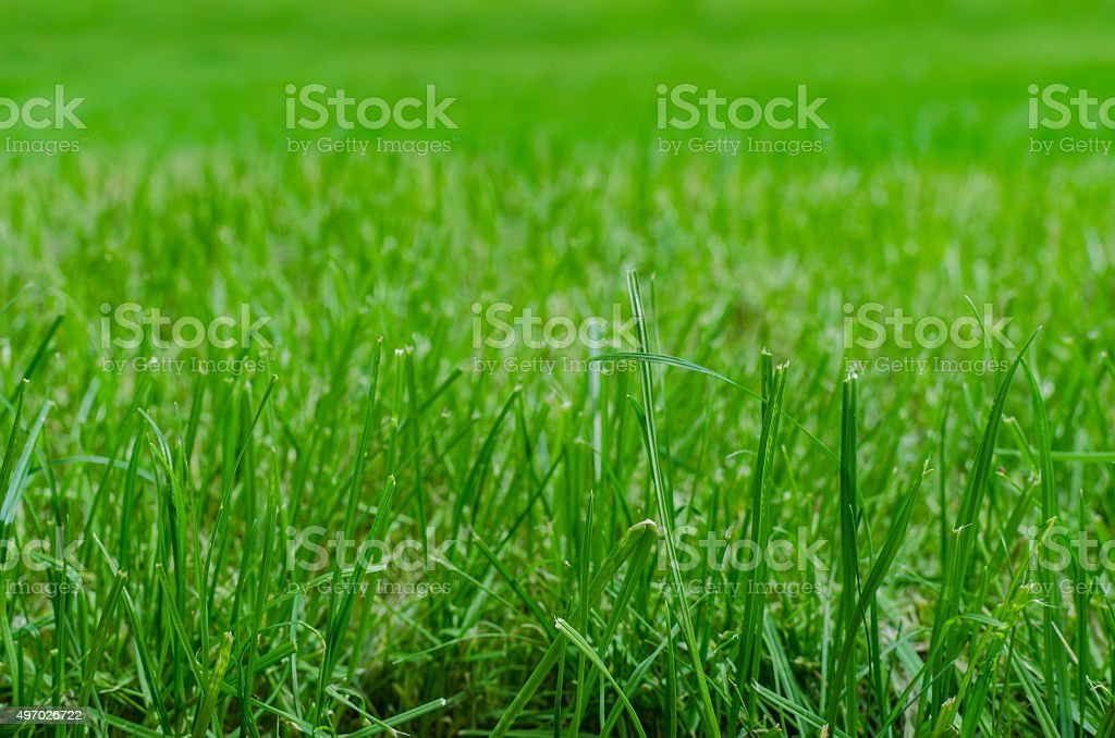 Lawn close up stock photo