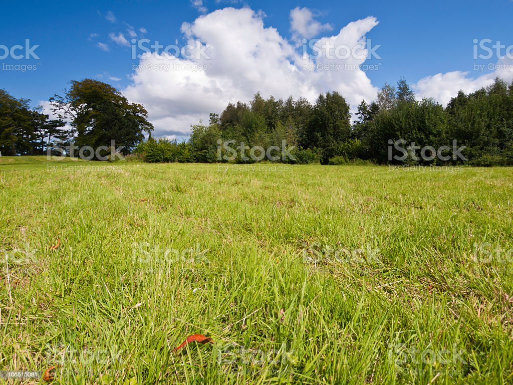 lawn in summer stock photo