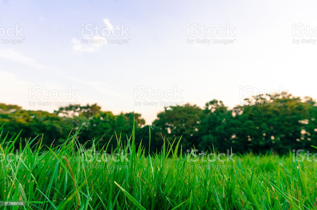 Lawn in the early morning royalty-free stock photo