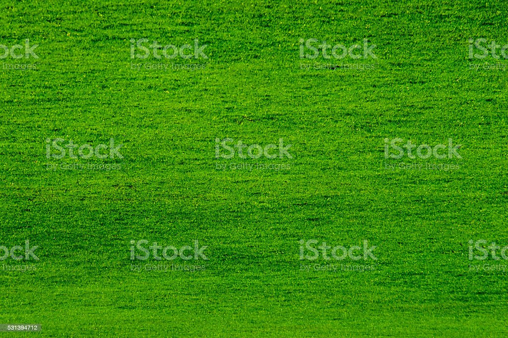 lawn in the stadium stock photo