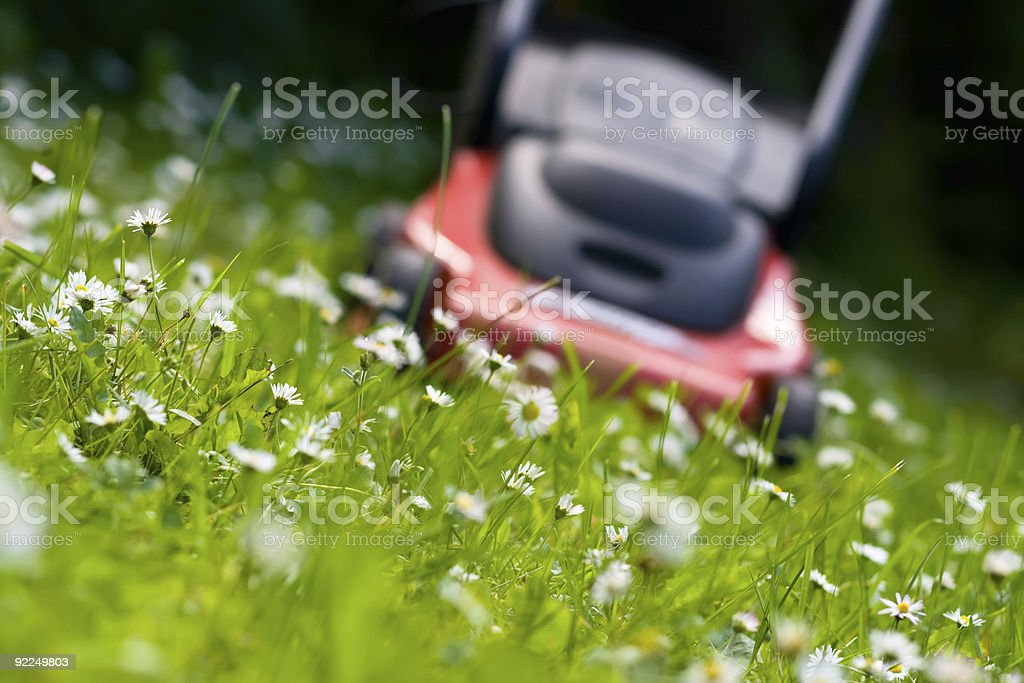 Lawn mower close up of weeds and lawn stock photo