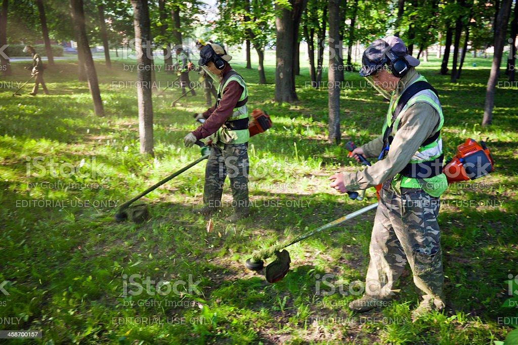 Lawn mower men trim grass in city park stock photo