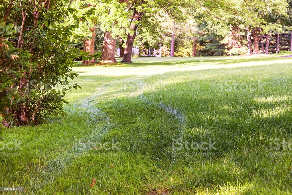 Lawn Mowing Curves Partially Completed Front Yard Grass Cutting stock photo