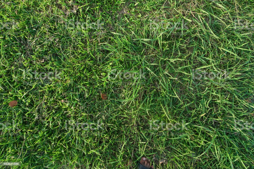 Lawn nature texture. stock photo