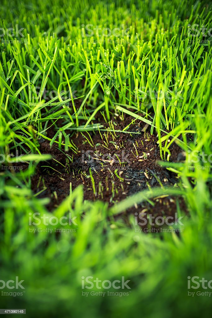 Lawn patch stock photo