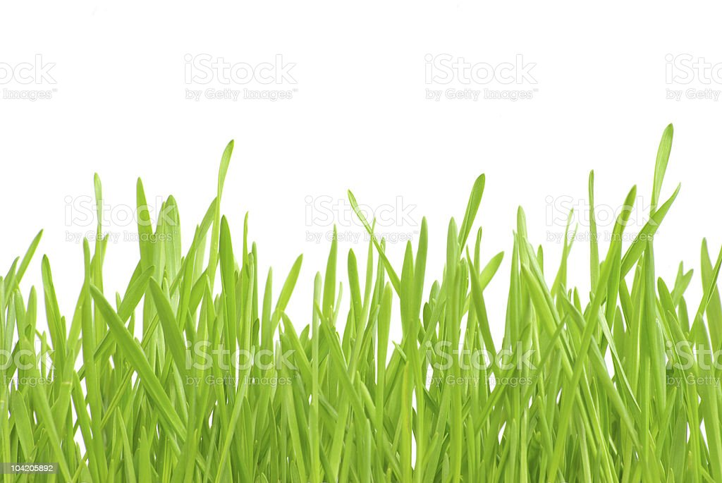 lawn royalty-free stock photo
