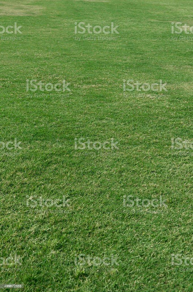 Lawn royalty-free stock photo