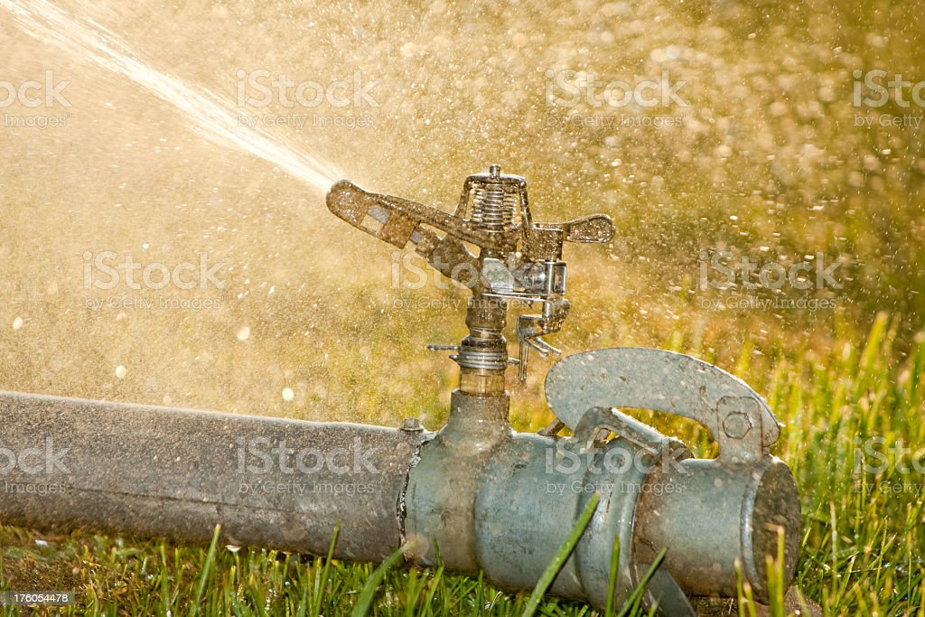 Lawn Sprinkler stock photo