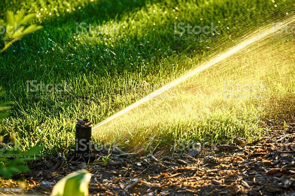 Lawn Sprinkler spraying water at sundown stock photo