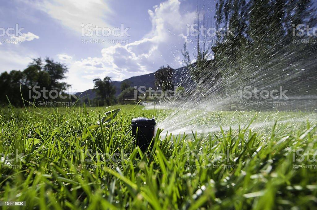 Lawn Sprinkler Spraying Water in Backyard stock photo