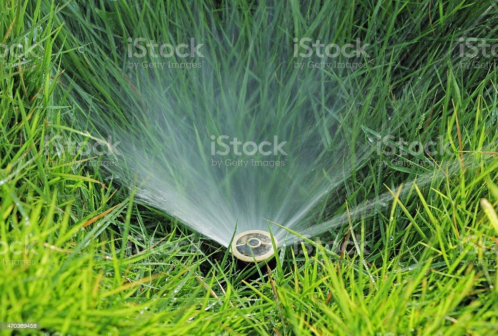 Lawn Water Sprinkler stock photo