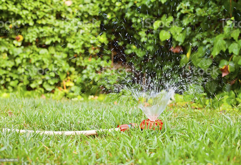 Lawn watering royalty-free stock photo
