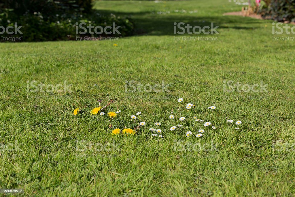 lawn weed pests grass stock photo