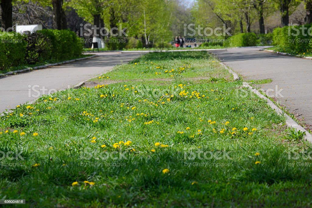 lawn with flowers in the city stock photo