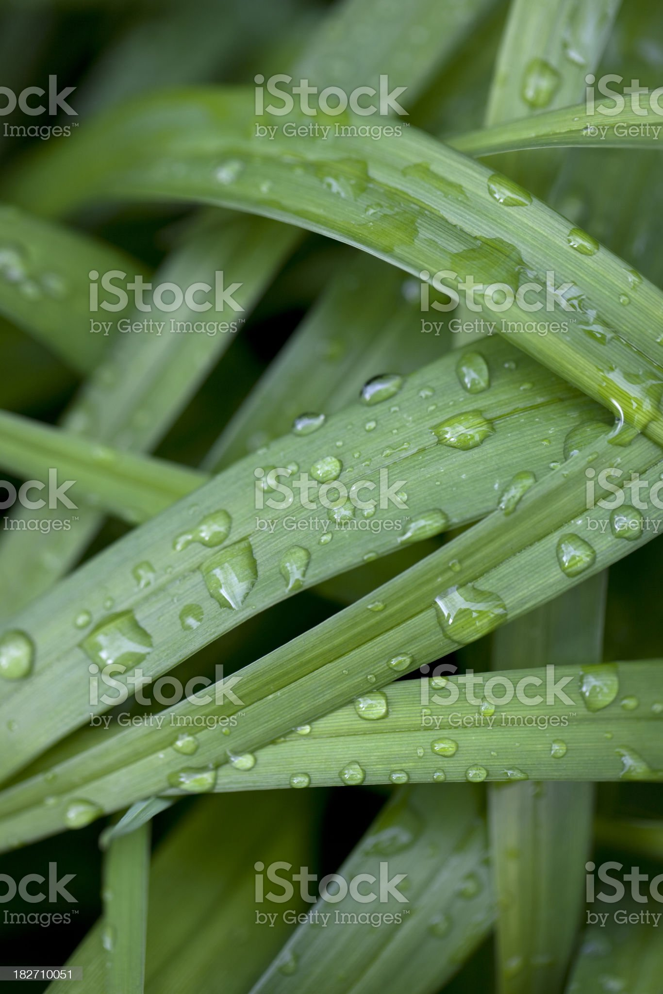 Layered Grass royalty-free stock photo