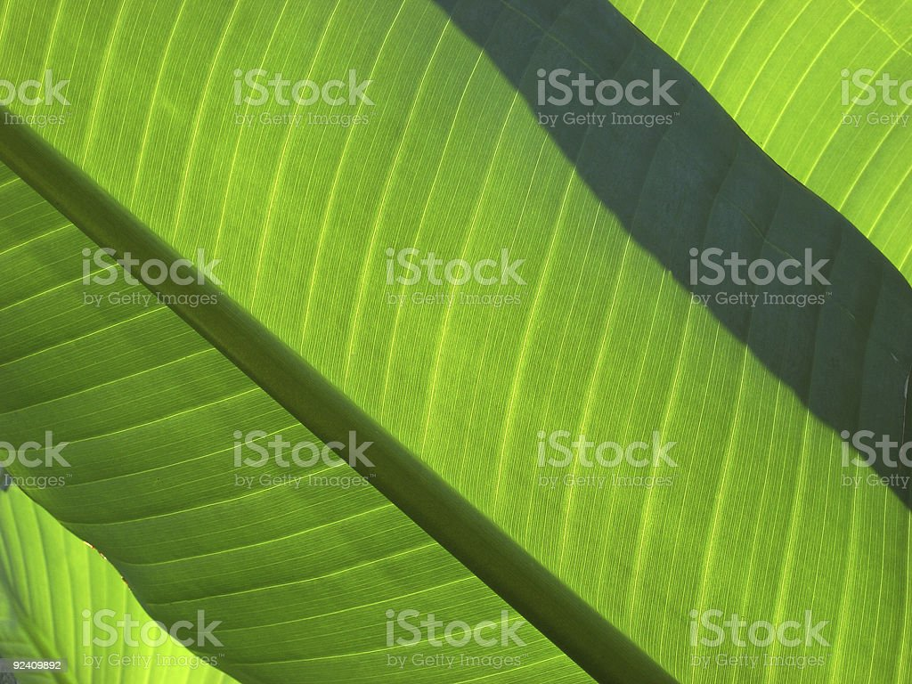 Layers of green leaves royalty-free stock photo
