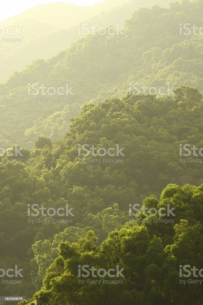 layers of green royalty-free stock photo