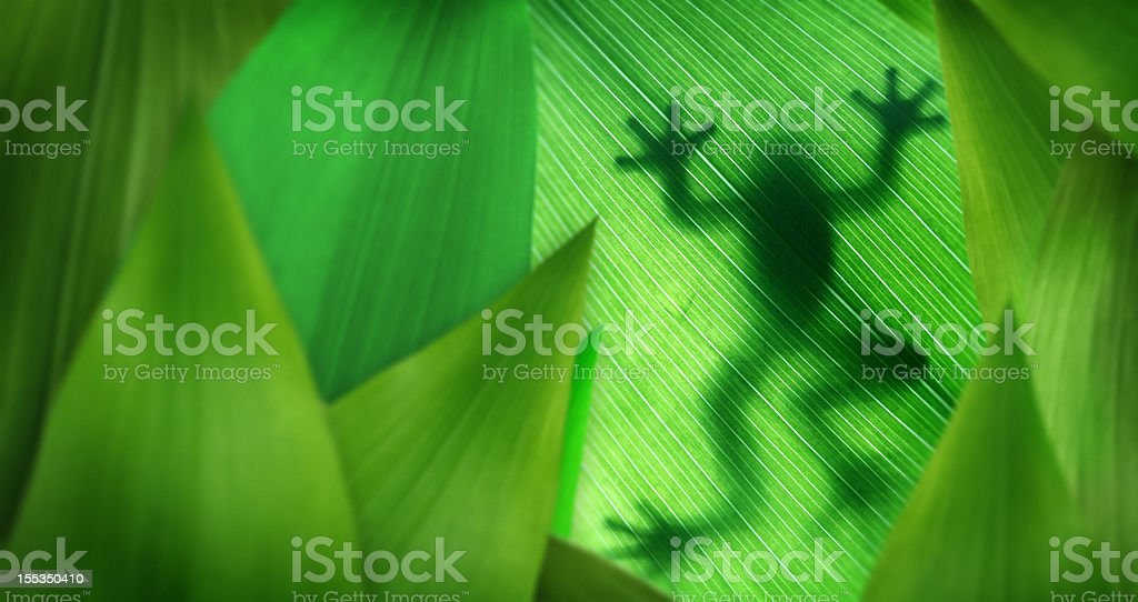 Layers of leaves with a tree frog silhouette stock photo