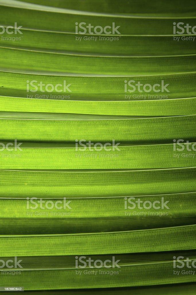 layers of pandan leaf stock photo