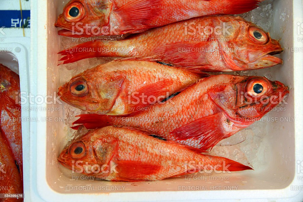 Layers of Red Fish stock photo
