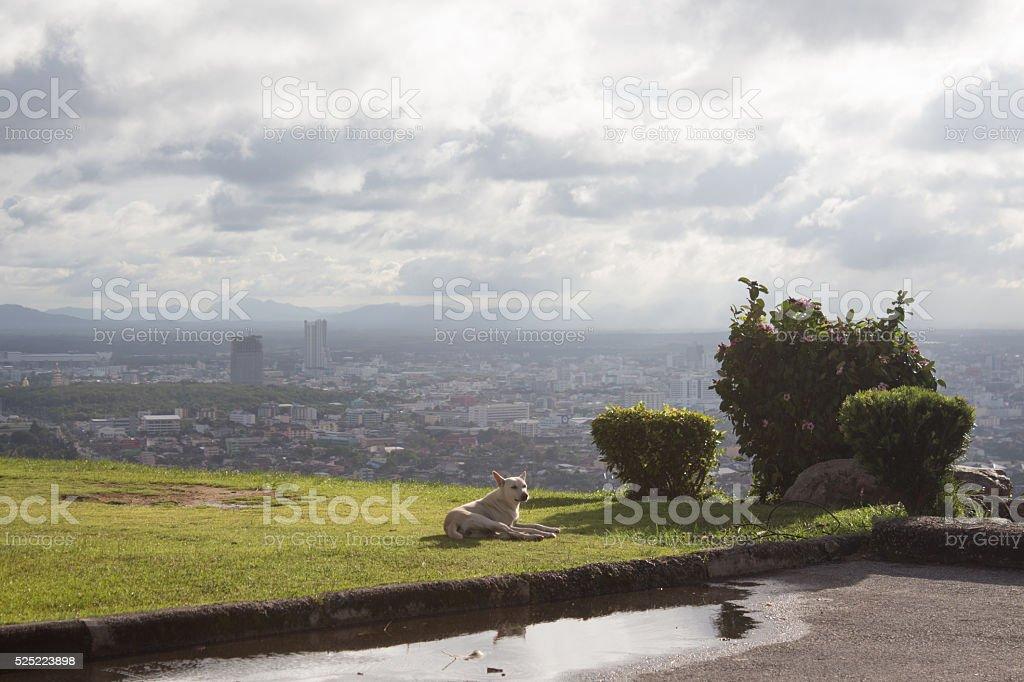 прокладка Собака на зеленая трава с сельских районах, вид на город Стоковые фото Стоковая фотография