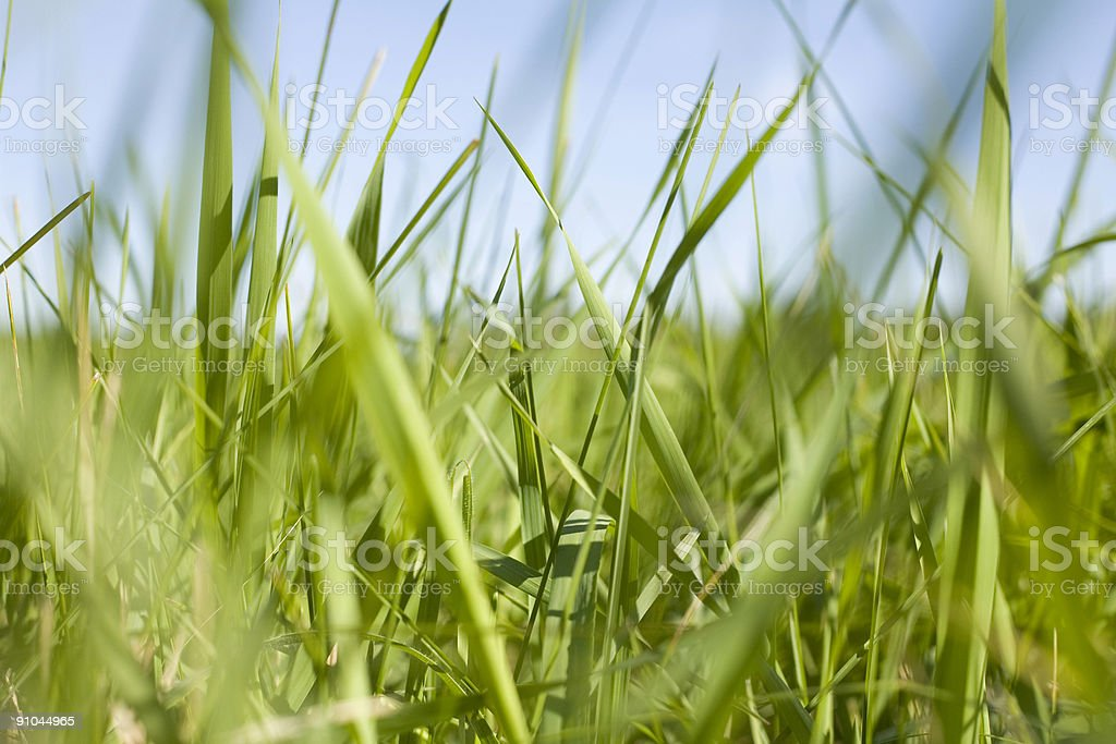 Laying in the rough. royalty-free stock photo