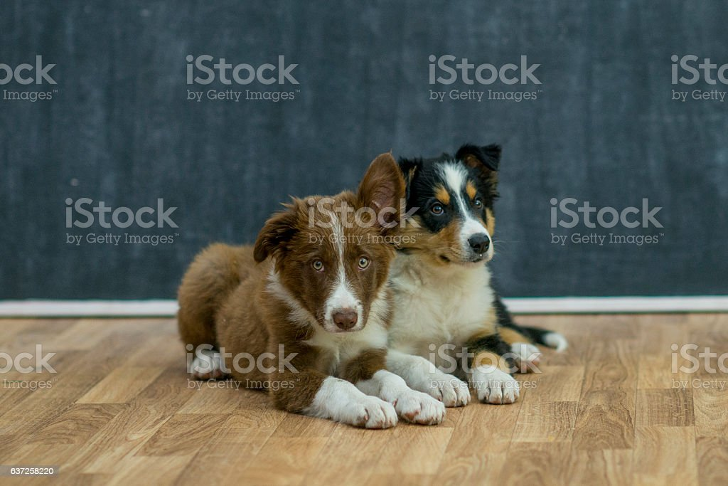 Laying Together stock photo