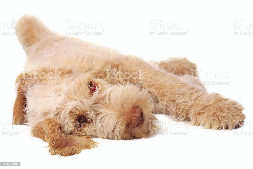 lazy bones stock photo